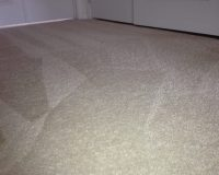 Pet Carpet Treatments VA