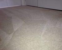Pet Carpet Treatments VA