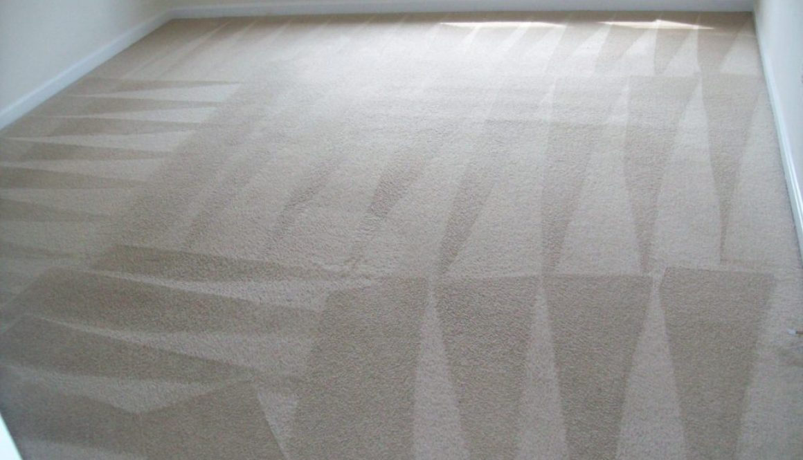 Steam Carpet Cleaning Services Spotsy VA