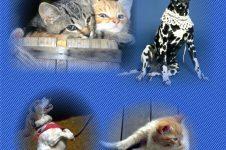 Pet Friendly Carpet Cleaning VA
