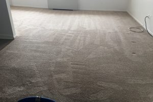 Apartment Carpet Cleaning - Cleaned After Alexandria VA 11