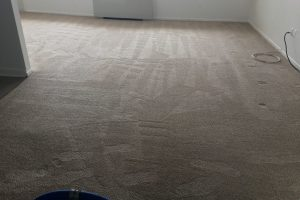 Apartment Carpet Cleaning - Cleaned After Alexandria VA 12
