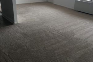 Apartment Carpet Cleaning - Cleaned After Alexandria VA 5