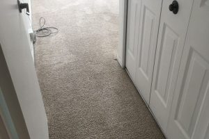 Apartment Carpet Cleaning - Cleaned After Alexandria VA 6