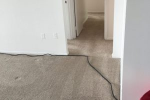 Apartment Carpet Cleaning - Cleaned After Alexandria VA