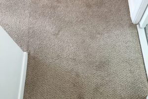 Apartment Carpet Cleaning - Dirty Before Alexandria VA 10