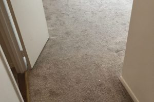 Apartment Carpet Cleaning - Dirty Before Alexandria VA 11