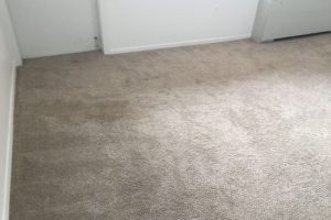 Apartment Carpet Cleaning - Dirty Before Alexandria VA 3