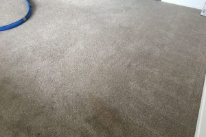 Apartment Carpet Cleaning - Dirty Before Alexandria VA 4