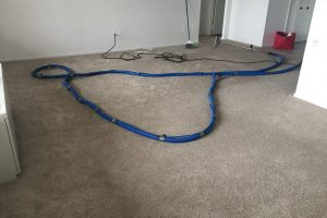 Apartment Carpet Cleaning - Dirty Before Alexandria VA 5