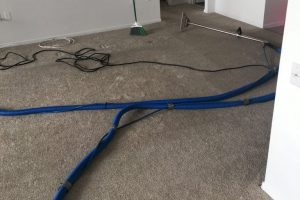 Apartment Carpet Cleaning - Dirty Before Alexandria VA 6
