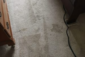 Carpet Cleaning VA Cleaned Alexandria 1