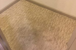 Fredericksburg VA Carpet Cleaning Spotsy