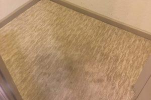 Fredericksburg VA Carpet Cleaning Spotsy