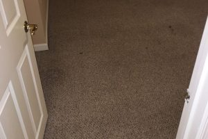 VA Dumfries Carpet Cleaners
