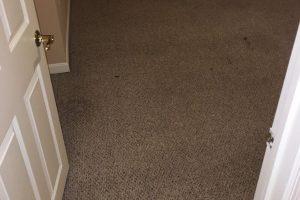 VA Dumfries Carpet Cleaners