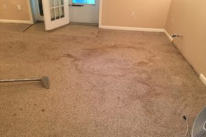 VA King George Carpet Clean