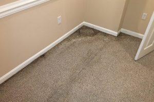 VA Steamers Carpets